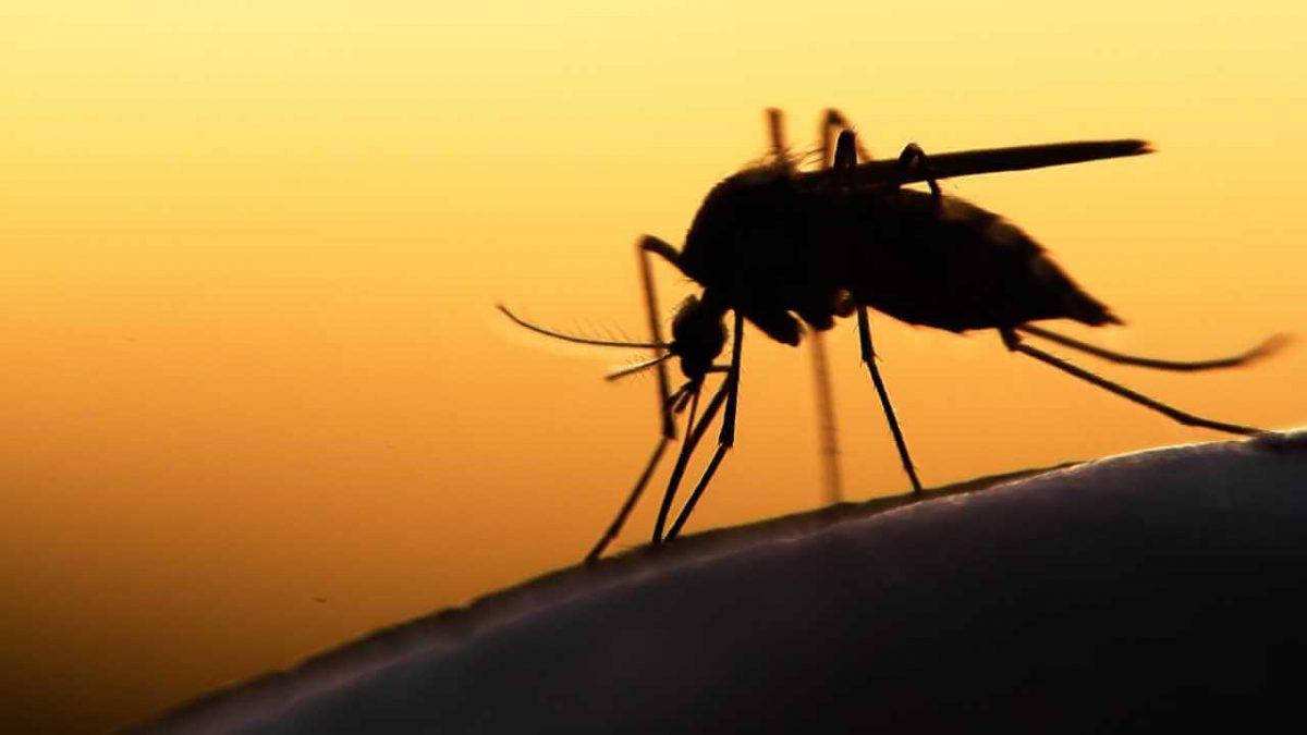 малярыя