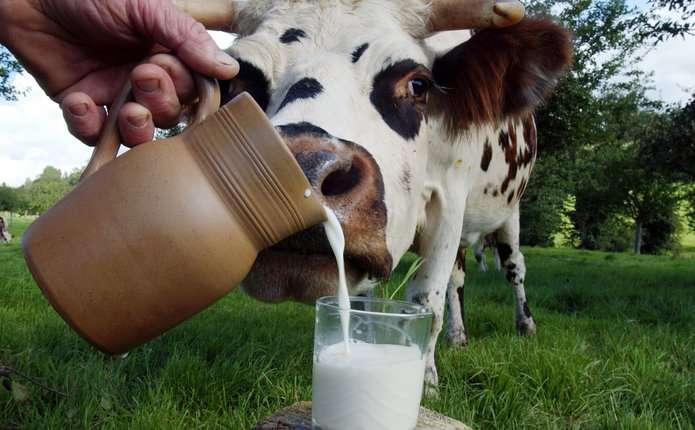 milk-10932